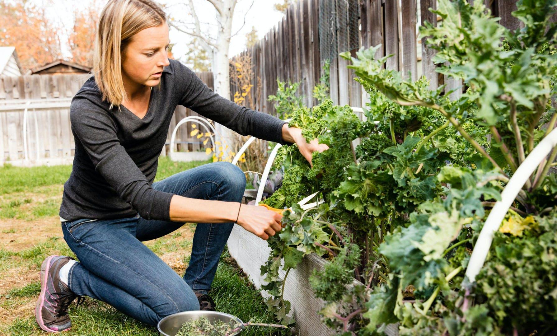 Stephanie Howe picking vegetables